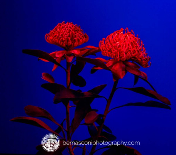 Painting the flowers with red torch light.